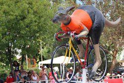 cycling-santos-tour-down-under11.jpg