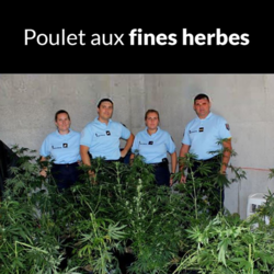 poulet fines herbes.png