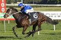 Horse-Winx-100527-636x424.jpg