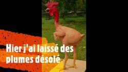 poulet.mp4