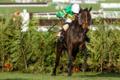 Horse-easysland-148824-750x500.jpg.png