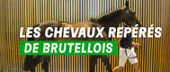 chevaux_rep_r__original.jpg