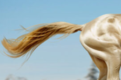 cheval d'or.PNG